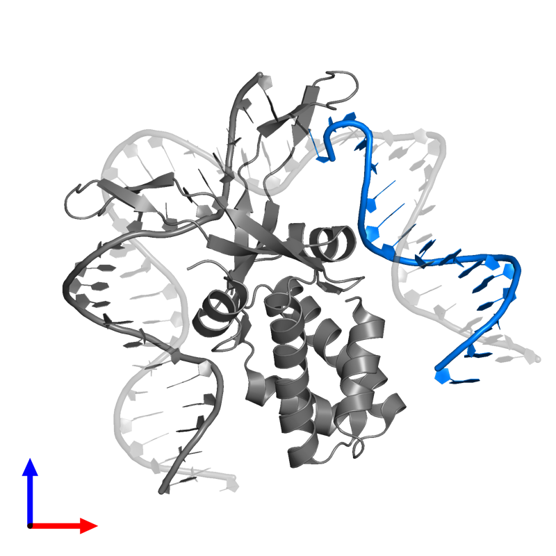 <div class='caption-body'>PDB entry 1owf contains 1 copy of 5'-D(*GP*GP*CP*CP*AP*AP*AP*AP*AP*AP*GP*CP*AP*TP*T)-3' in assembly 1. This DNA molecule is highlighted and viewed from the front.</div>