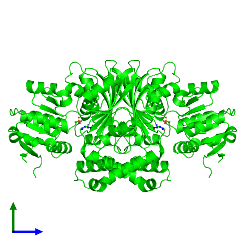 <div class='caption-body'><ul class ='image_legend_ul'> Dimeric assembly 1 of PDB entry 1pqp coloured by chemically distinct molecules and viewed from the front. This assembly contains:<li class ='image_legend_li'>2 copies of Aspartate-semialdehyde dehydrogenase</li><li class ='image_legend_li'>2 copies of PHOSPHATE ION</li><li class ='image_legend_li'>2 copies of L-HOMOSERINE</li></ul></div>