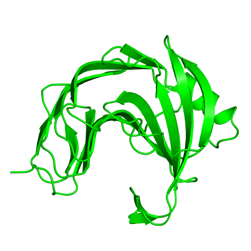 <div class='caption-body'>1 copy of CATH domain <a target='_blank' href='http://www.cathdb.info/cathnode/2.60.120.180'>2.60.120.180</a> (Jelly Rolls) in Endo-1,4-beta-xylanase in PDB entry 1pvx.</div>
