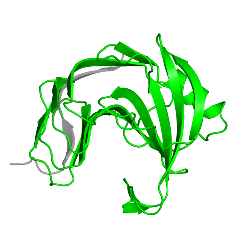 <div class='caption-body'>1 copy of Pfam domain <a target='_blank' href='pfam.xfam.org/family/PF00457'>PF00457</a> (Glycosyl hydrolases family 11) in Endo-1,4-beta-xylanase in PDB entry 1pvx.</div>