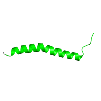 1 copy of SCOP domain 81501 (ISP transmembrane anchor) in Cytochrome b6-f complex iron-sulfur subunit, chloroplastic in PDB 1q90.