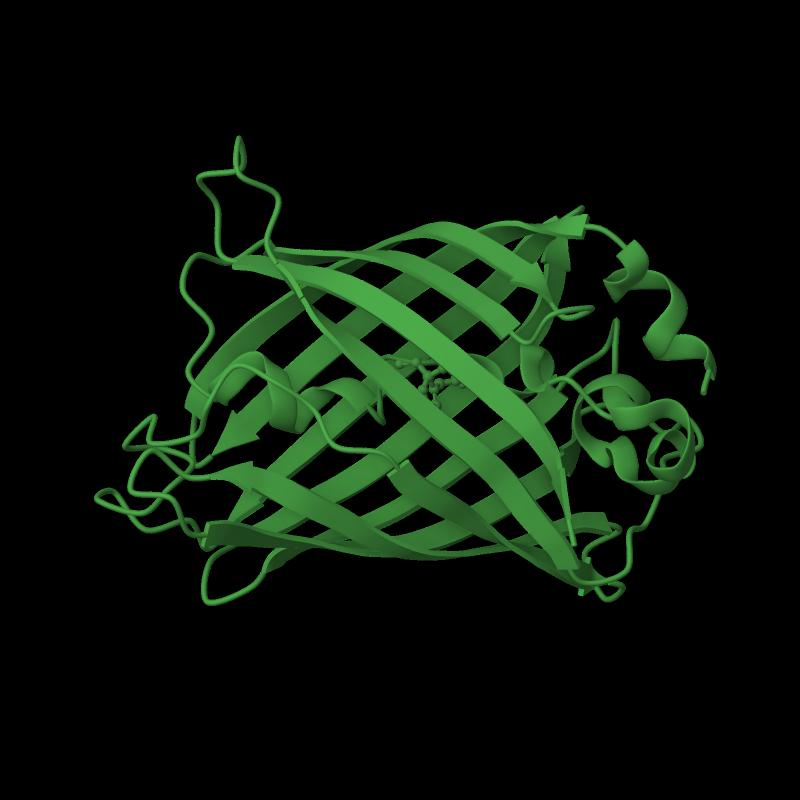 <div class='caption-body'>1 copy of SCOP domain <a target='_blank' href='http://scop.mrc-lmb.cam.ac.uk/scop/search.cgi?sccs=54512'>54512</a> (Fluorescent proteins) in Green fluorescent protein in PDB entry 1qyq.</div>