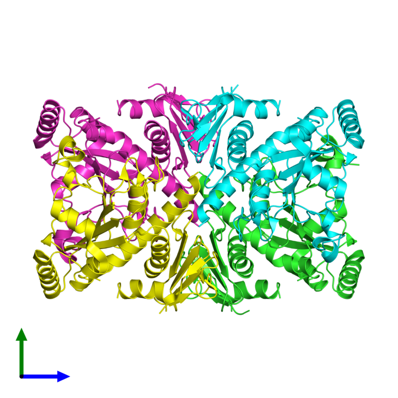 <div class='caption-body'><ul class ='image_legend_ul'>The deposited structure of PDB entry 1r52 coloured by chain and viewed from the front. The entry contains: <li class ='image_legend_li'>4 copies of Chorismate synthase</li><li class ='image_legend_li'>There are no non-polymeric molecules</li></ul></li></ul></li></div>