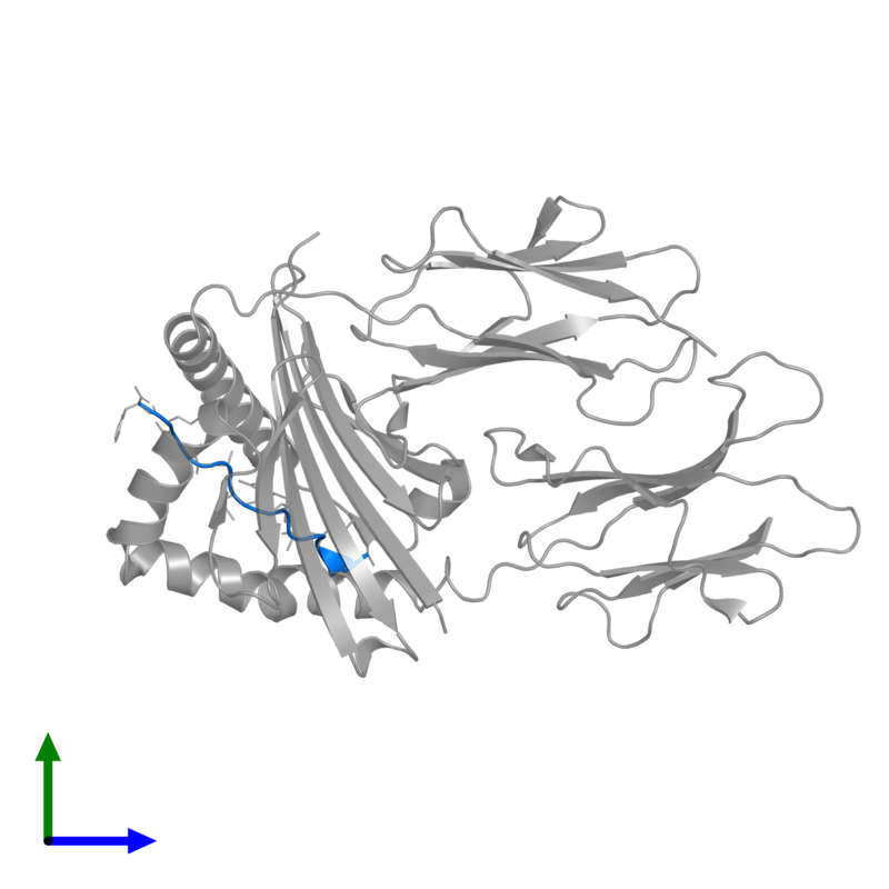 <div class='caption-body'>PDB entry 1r5v contains 1 copy of artificial peptide in assembly 2. This protein is highlighted and viewed from the front.</div>