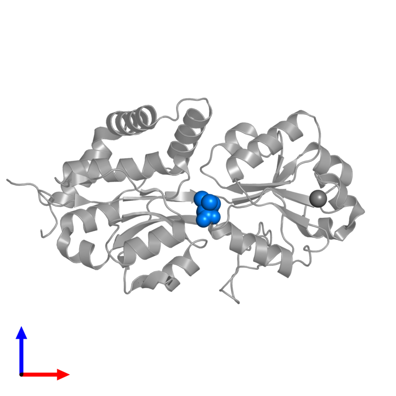 <div class='caption-body'>PDB entry 1r9q contains 1 copy of 1,1-DIMETHYL-PROLINIUM in assembly 1. This small molecule is highlighted and viewed from the front.</div>