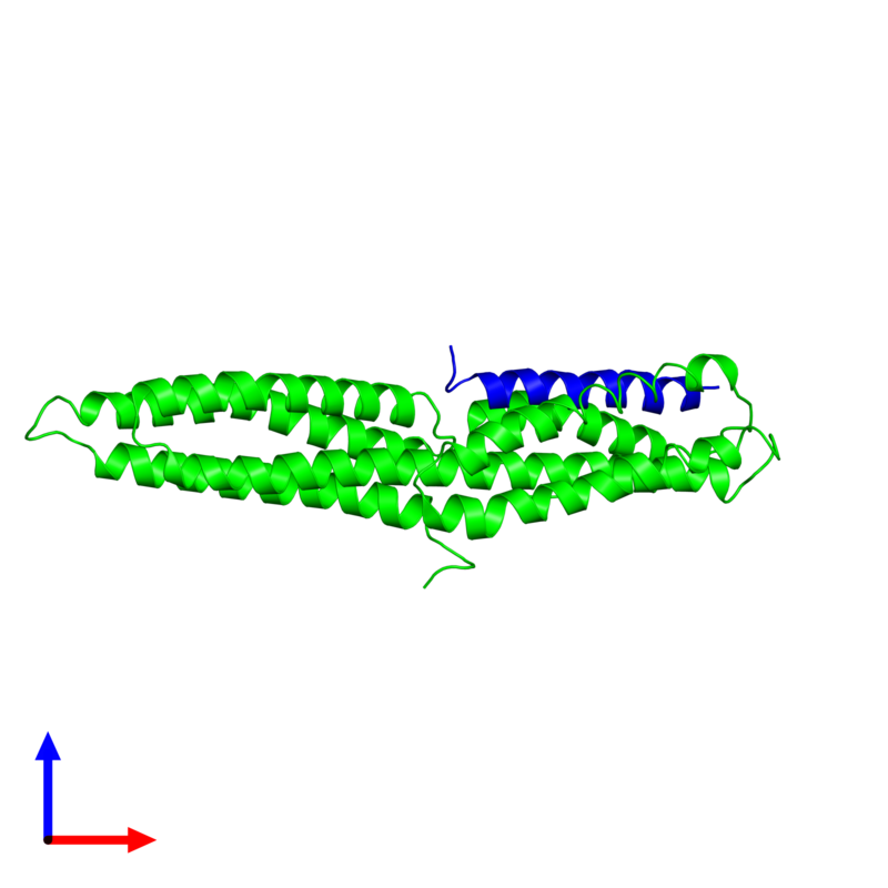 <div class='caption-body'><ul class ='image_legend_ul'> Dimeric assembly 1 of PDB entry 1rkc coloured by chemically distinct molecules and viewed from the side. This assembly contains:<li class ='image_legend_li'>One copy of Vinculin</li><li class ='image_legend_li'>One copy of Talin-1</li></ul></div>
