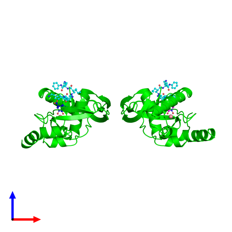 <div class='caption-body'><ul class ='image_legend_ul'>The deposited structure of PDB entry 1rl4 coloured by chemically distinct molecules and viewed from the side. The entry contains: <li class ='image_legend_li'>2 copies of Peptide deformylase</li><li class ='image_legend_li'>3 non-polymeric entities<ul class ='image_legend_ul'><li class ='image_legend_li'>2 copies of COBALT (II) ION</li><li class ='image_legend_li'>2 copies of (2R)-2-{[FORMYL(HYDROXY)AMINO]METHYL}HEXANOIC ACID</li><li class ='image_legend_li'>2 copies of 2-{N'-[2-(5-AMINO-1-PHENYLCARBAMOYL-PENTYLCARBAMOYL)-HEXYL]-HYDRAZINOMETHYL}-HEXANOIC ACID(5-AMINO-1-PHENYLCARBAMOYL-PENTYL)-AMIDE</li></ul></li></div>