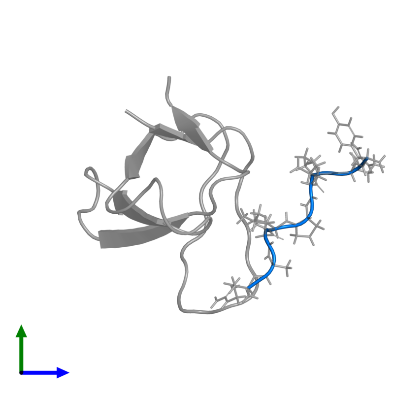 <div class='caption-body'>PDB entry 1rlp contains 1 copy of PROLINE-RICH LIGAND RLP2 (RALPPLPRY) in assembly 1. This protein is highlighted and viewed from the front.</div>