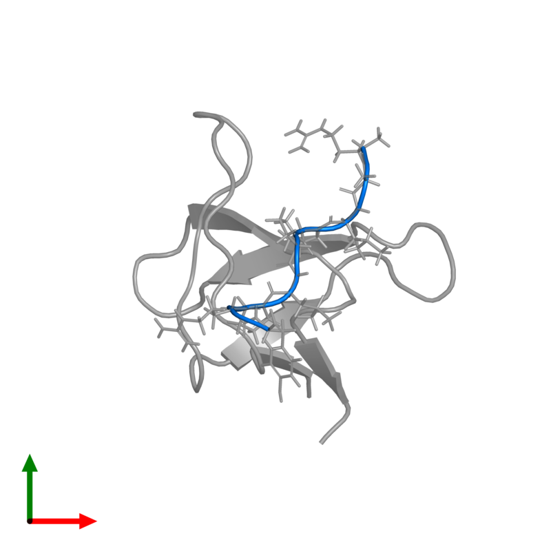 <div class='caption-body'>PDB entry 1rlp contains 1 copy of PROLINE-RICH LIGAND RLP2 (RALPPLPRY) in assembly 1. This protein is highlighted and viewed from the top.</div>