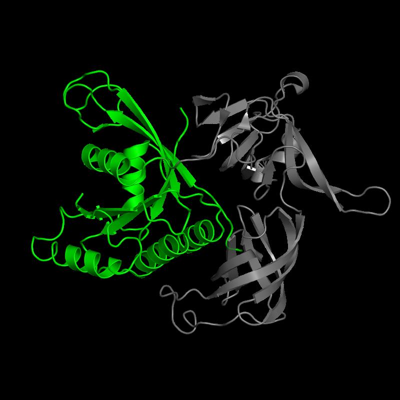 <div class='caption-body'>1 copy of CATH domain <a target='_blank' href='http://www.cathdb.info/cathnode/3.40.50.300'>3.40.50.300</a> (Rossmann fold) in Translation initiation factor 2 subunit gamma in PDB entry 1s0u.</div>