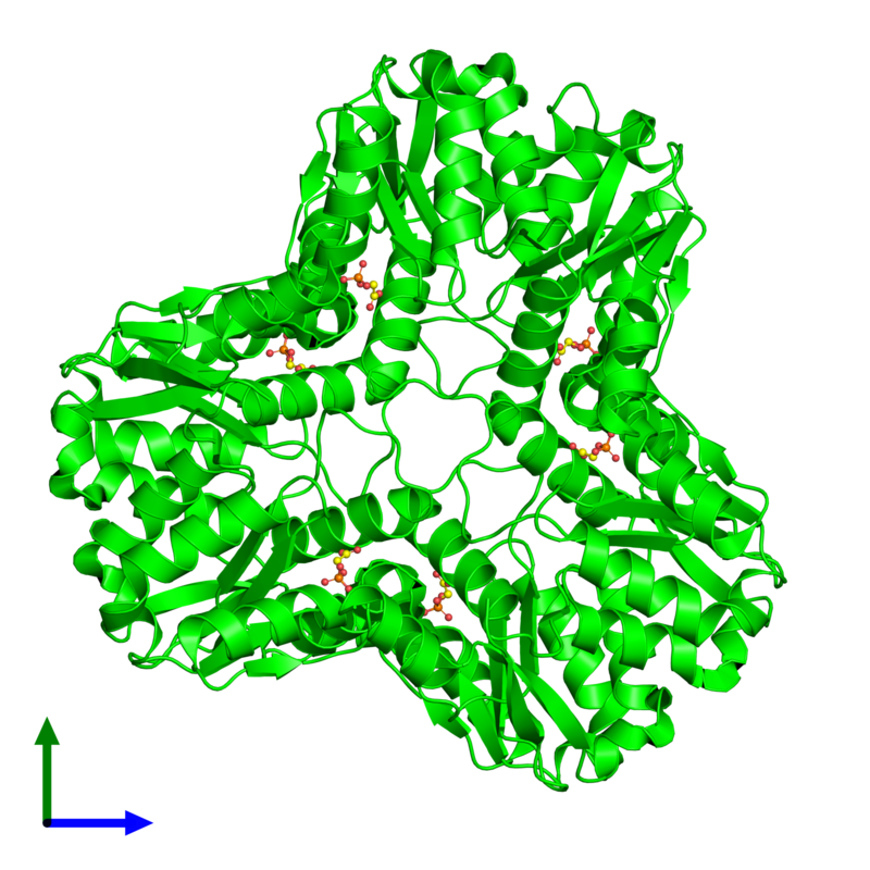 <div class='caption-body'><ul class ='image_legend_ul'> Hexameric assembly 1 of PDB entry 1s8a coloured by chemically distinct molecules and viewed from the front. This assembly contains:<li class ='image_legend_li'>6 copies of Methylglyoxal synthase</li><li class ='image_legend_li'>6 copies of 2-PHOSPHOGLYCOLIC ACID</li></ul></div>