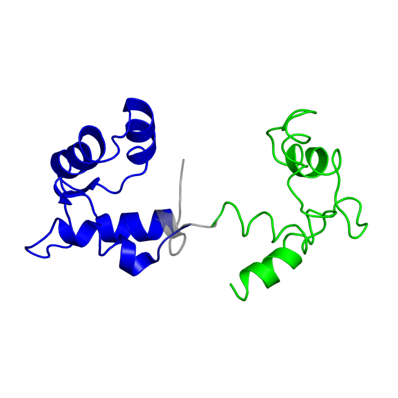 <div class='caption-body'>2 copies of CATH domain <a target='_blank' href='http://www.cathdb.info/cathnode/1.10.238.10'>1.10.238.10</a> (Recoverin; domain 1) in Myosin regulatory light chain, striated adductor muscle in PDB entry 1sr6.</div>