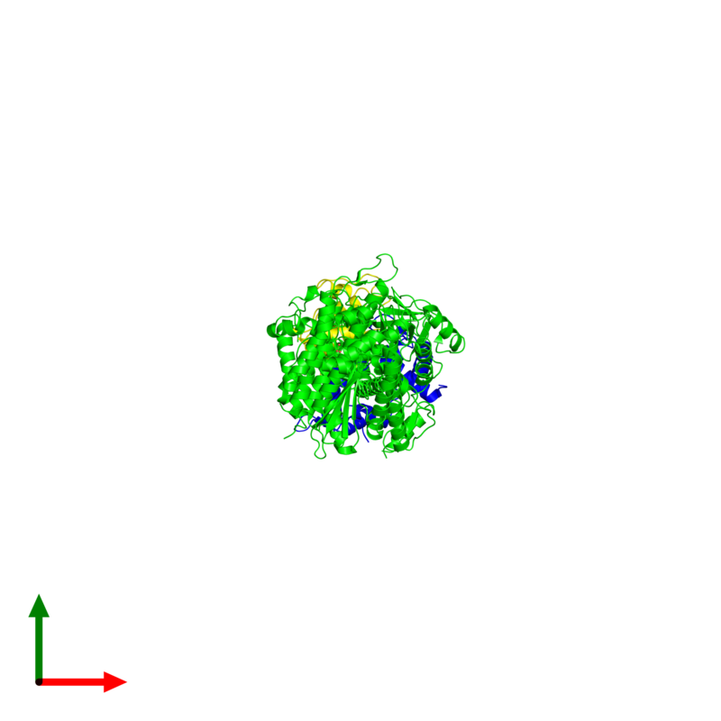 <div class='caption-body'><ul class ='image_legend_ul'> Trimeric assembly 1 of PDB entry 1sr6 coloured by chemically distinct molecules and viewed from the top. This assembly contains:<li class ='image_legend_li'>One copy of Myosin heavy chain, striated muscle</li><li class ='image_legend_li'>One copy of Myosin regulatory light chain, striated adductor muscle</li><li class ='image_legend_li'>One copy of Myosin essential light chain, striated adductor muscle</li><li class ='image_legend_li'>One copy of SULFATE ION</li><li class ='image_legend_li'>One copy of MAGNESIUM ION</li><li class ='image_legend_li'>One copy of CALCIUM ION</li></ul></div>