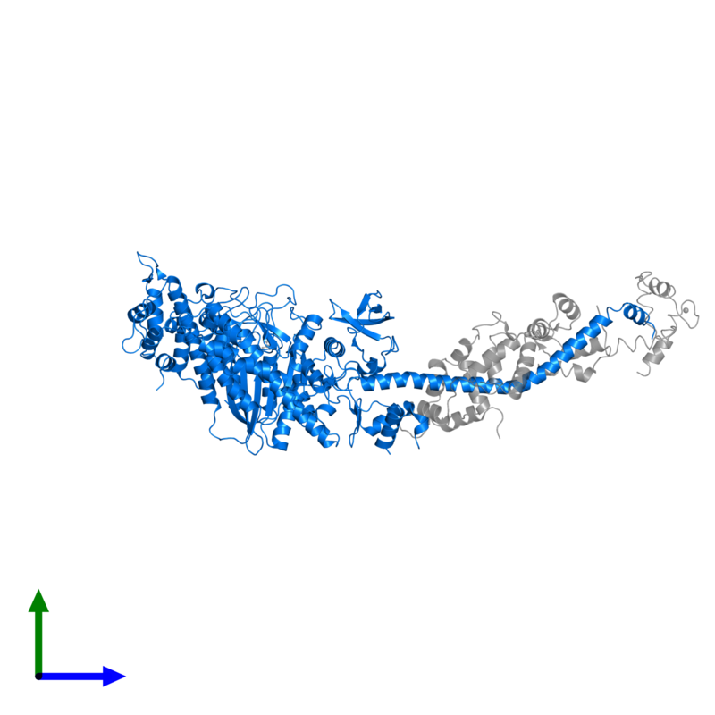 <div class='caption-body'>PDB entry 1sr6 contains 1 copy of Myosin heavy chain, striated muscle in assembly 1. This protein is highlighted and viewed from the front.</div>