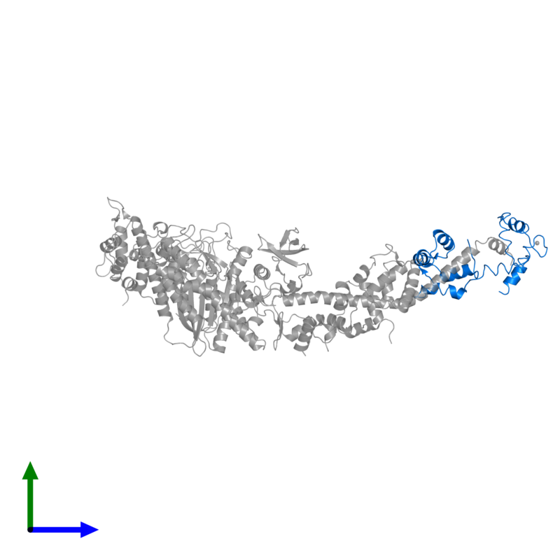 <div class='caption-body'>PDB entry 1sr6 contains 1 copy of Myosin regulatory light chain, striated adductor muscle in assembly 1. This protein is highlighted and viewed from the front.</div>