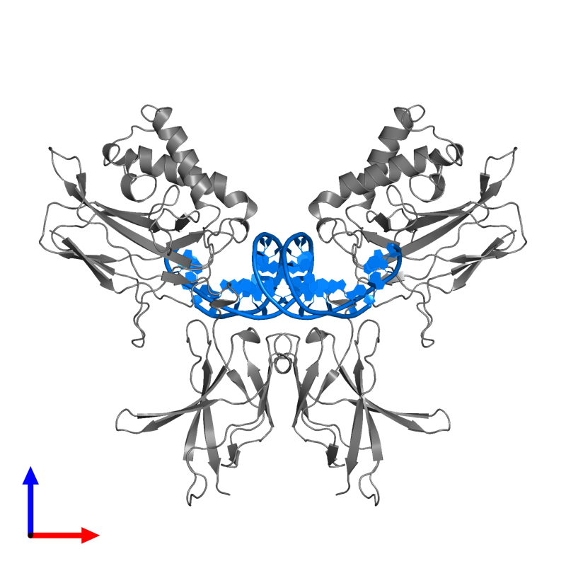<div class='caption-body'>PDB entry 1svc contains 2 copies of DNA (5'-D(*AP*GP*AP*TP*GP*GP*GP*GP*AP*AP*TP*CP*CP*CP*CP*TP*A P*GP*A)-3') in assembly 1. This DNA molecule is highlighted and viewed from the front.</div>