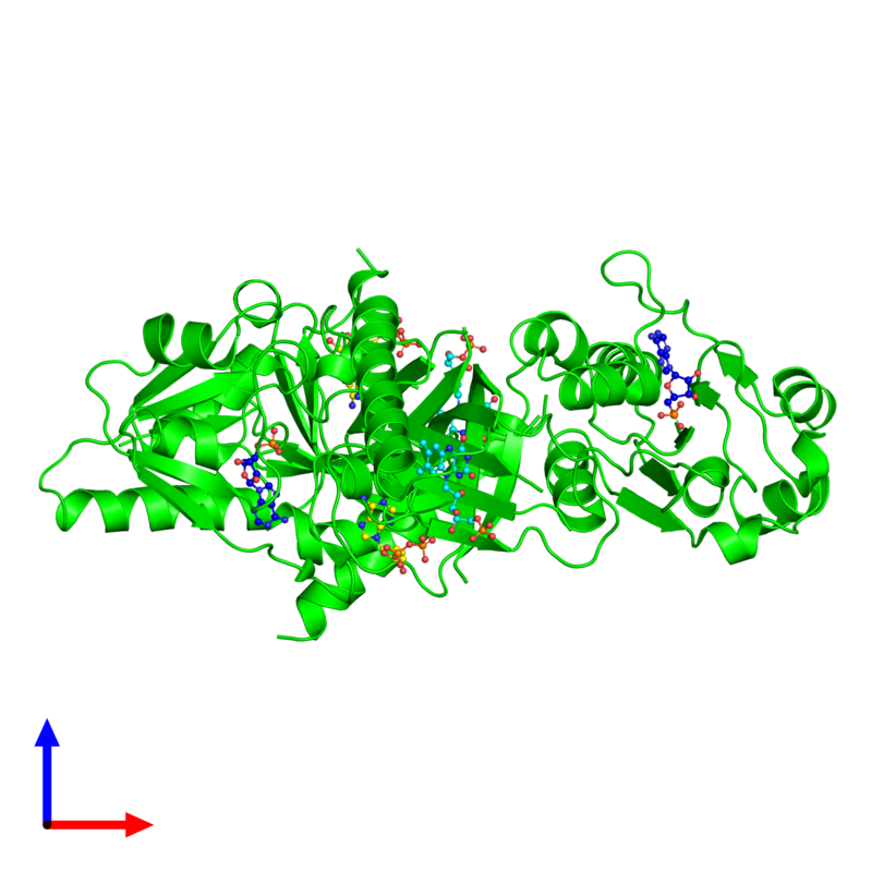 <div class='caption-body'><ul class ='image_legend_ul'> Dimeric assembly 1 of PDB entry 1t6y coloured by chemically distinct molecules and viewed from the side. This assembly contains:<li class ='image_legend_li'>2 copies of Riboflavin biosynthesis protein</li><li class ='image_legend_li'>2 copies of ADENOSINE-5'-DIPHOSPHATE</li><li class ='image_legend_li'>2 copies of ADENOSINE MONOPHOSPHATE</li><li class ='image_legend_li'>2 copies of FLAVIN MONONUCLEOTIDE</li></ul></div>