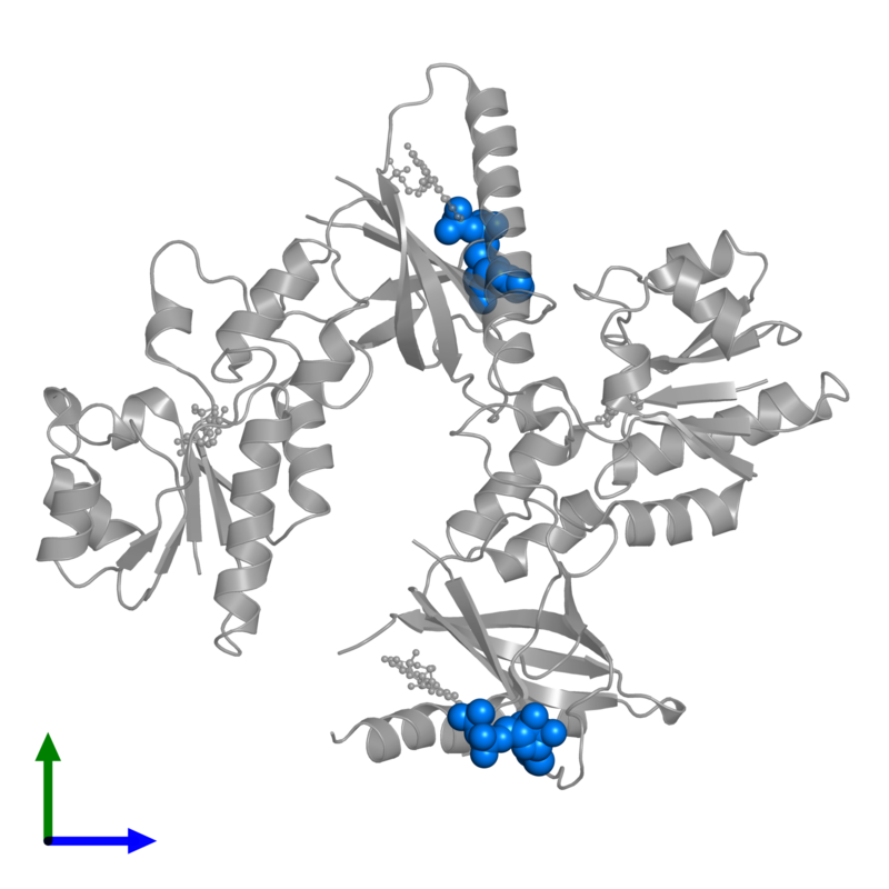 <div class='caption-body'>PDB entry 1t6y contains 2 copies of ADENOSINE-5'-DIPHOSPHATE in assembly 1. This small molecule is highlighted and viewed from the front.</div>