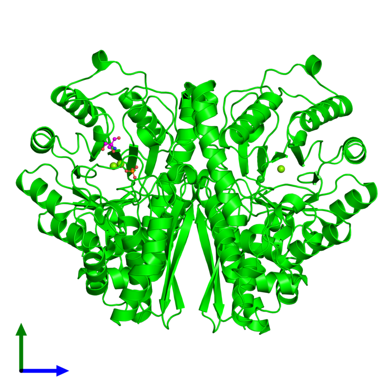 <div class='caption-body'><ul class ='image_legend_ul'> Dimeric assembly 1 of PDB entry 1te6 coloured by chemically distinct molecules and viewed from the front. This assembly contains:<li class ='image_legend_li'>2 copies of Gamma-enolase</li><li class ='image_legend_li'>3 copies of MAGNESIUM ION</li><li class ='image_legend_li'>One copy of PHOSPHATE ION</li><li class ='image_legend_li'>One copy of 2-AMINO-2-HYDROXYMETHYL-PROPANE-1,3-DIOL</li><li class ='image_legend_li'>One copy of CHLORIDE ION</li></ul></div>