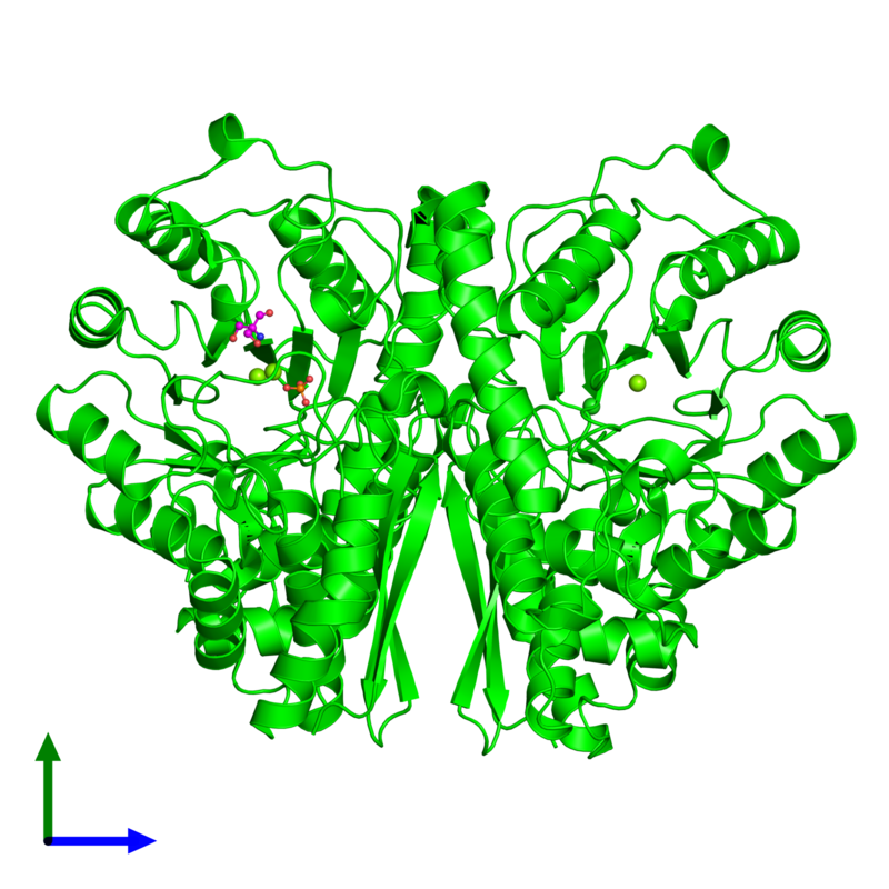 <div class='caption-body'><ul class ='image_legend_ul'>The deposited structure of PDB entry 1te6 coloured by chemically distinct molecules and viewed from the front. The entry contains: <li class ='image_legend_li'>2 copies of Gamma-enolase</li><li class ='image_legend_li'>4 non-polymeric entities<ul class ='image_legend_ul'><li class ='image_legend_li'>3 copies of MAGNESIUM ION</li><li class ='image_legend_li'>1 copy of PHOSPHATE ION</li><li class ='image_legend_li'>1 copy of 2-AMINO-2-HYDROXYMETHYL-PROPANE-1,3-DIOL</li><li class ='image_legend_li'>1 copy of CHLORIDE ION</li></ul></li></div>