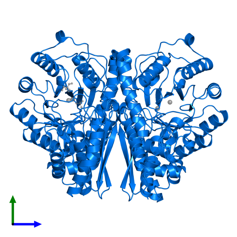 <div class='caption-body'>PDB entry 1te6 contains 2 copies of Gamma-enolase in assembly 1. This protein is highlighted and viewed from the front.</div>