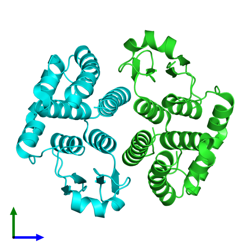 <div class='caption-body'><ul class ='image_legend_ul'> Dimeric assembly 4 of PDB entry 1tw9 coloured by chain and viewed from the front. This assembly contains:<li class ='image_legend_li'>2 copies of Glutathione S-transferase 2</li></ul></div>