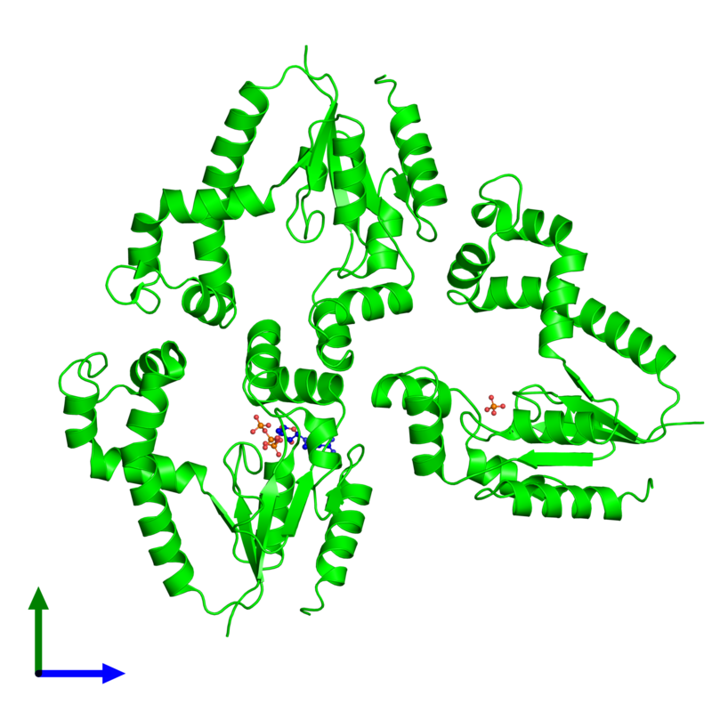 <div class='caption-body'><ul class ='image_legend_ul'>The deposited structure of PDB entry 1uf9 coloured by chemically distinct molecules and viewed from the front. The entry contains: <li class ='image_legend_li'>3 copies of Dephospho-CoA kinase</li><li class ='image_legend_li'>2 non-polymeric entities<ul class ='image_legend_ul'><li class ='image_legend_li'>1 copy of PHOSPHATE ION</li><li class ='image_legend_li'>1 copy of ADENOSINE-5'-TRIPHOSPHATE</li></ul></li></div>
