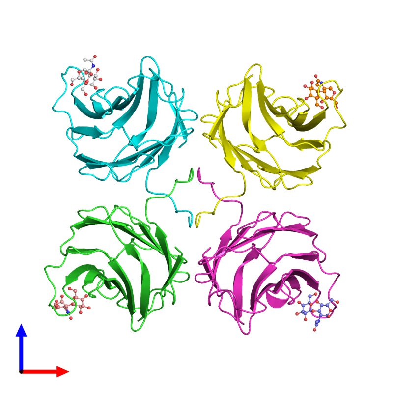 <div class='caption-body'><ul class ='image_legend_ul'>The deposited structure of PDB entry 1ulg coloured by chain and viewed from the front. The entry contains: <li class ='image_legend_li'>4 copies of Galectin-2</li><li class ='image_legend_li'>There are no non-polymeric molecules</li></ul></li></ul></li></div>