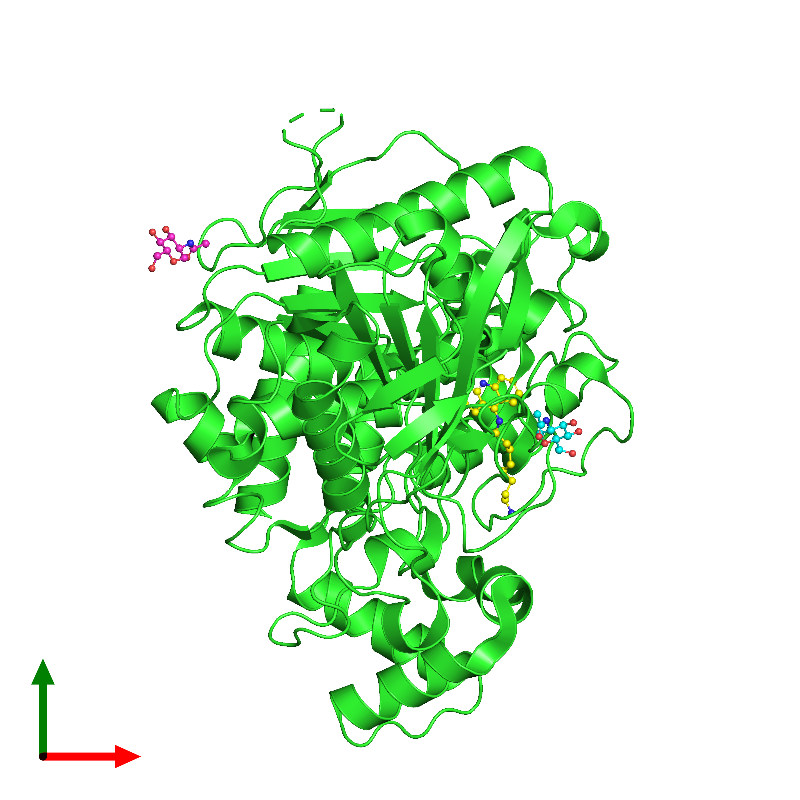 <div class='caption-body'><ul class ='image_legend_ul'>The deposited structure of PDB entry 1ut6 coloured by chain and viewed from the top. The entry contains: <li class ='image_legend_li'>1 copy of ACETYLCHOLINESTERASE</li><li class ='image_legend_li'>2 non-polymeric entities<ul class ='image_legend_ul'><li class ='image_legend_li'>2 copies of 2-acetamido-2-deoxy-beta-D-glucopyranose</li><li class ='image_legend_li'>1 copy of N-9-(1',2',3',4'-TETRAHYDROACRIDINYL)-1,8-DIAMINOOCTANE</li></ul></li></div>