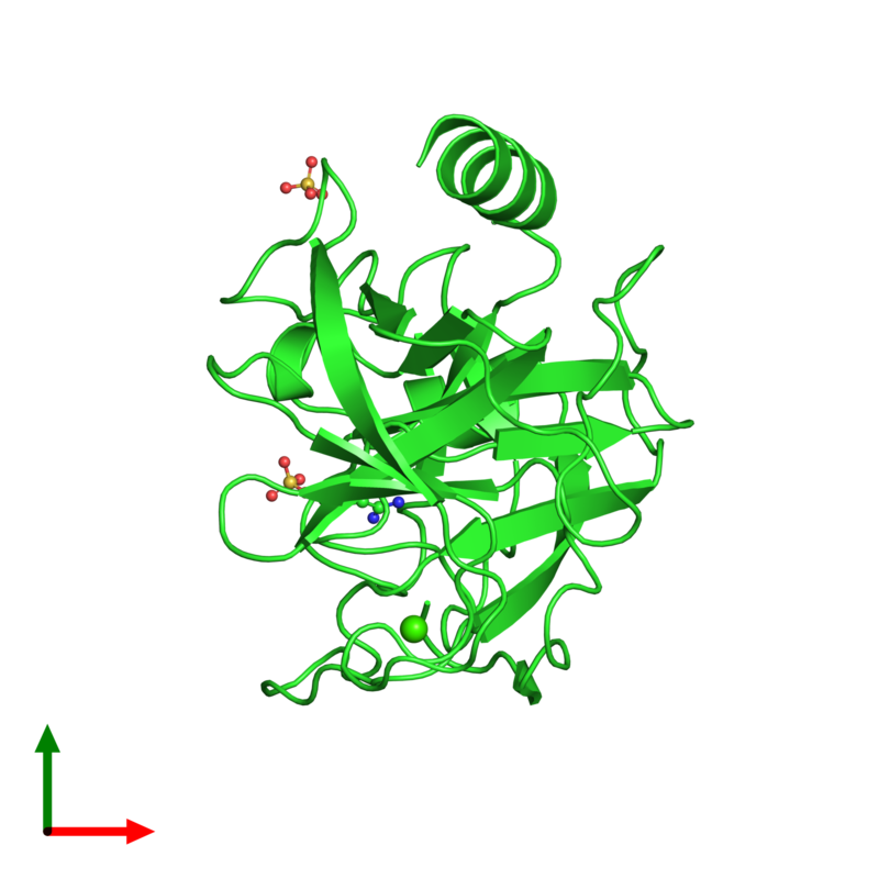 <div class='caption-body'><ul class ='image_legend_ul'>The deposited structure of PDB entry 1v2s coloured by chain and viewed from the top. The entry contains: <li class ='image_legend_li'>1 copy of Cationic trypsin</li><li class ='image_legend_li'>3 non-polymeric entities<ul class ='image_legend_ul'><li class ='image_legend_li'>2 copies of SULFATE ION</li><li class ='image_legend_li'>1 copy of CALCIUM ION</li><li class ='image_legend_li'>1 copy of BENZAMIDINE</li></ul></li></div>