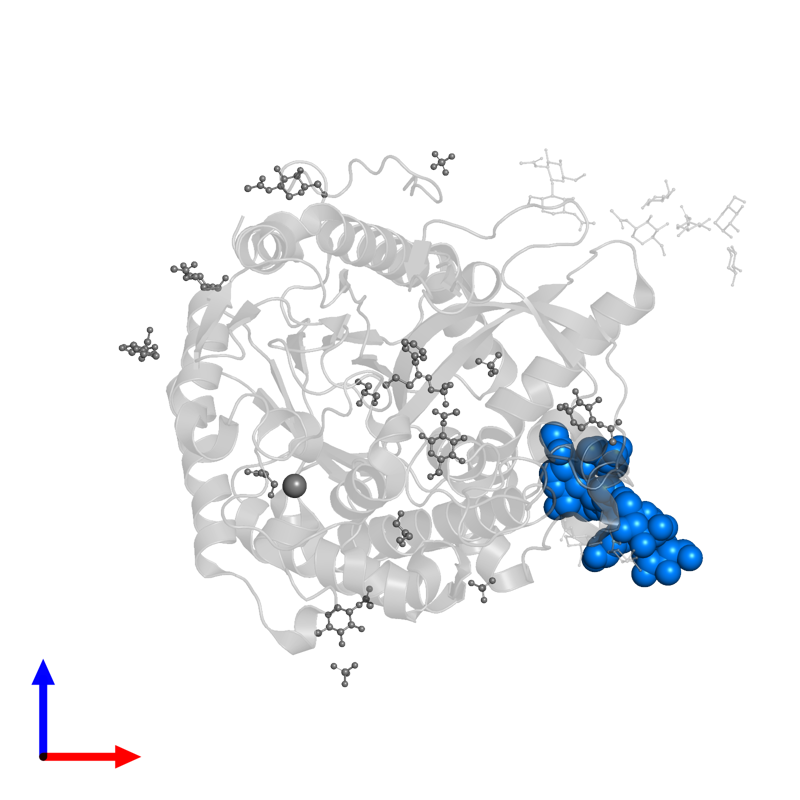 <div class='caption-body'>PDB entry 1w9d contains 1 copy of beta-D-xylopyranose-(1-2)-[alpha-D-mannopyranose-(1-3)][alpha-D-mannopyranose-(1-6)]beta-D-mannopyranose-(1-4)-2-acetamido-2-deoxy-beta-D-glucopyranose-(1-4)-[alpha-L-fucopyranose-(1-3)]2-acetamido-2-deoxy-beta-D-glucopyranose in assembly 1. This small molecule is highlighted and viewed from the front.</div>