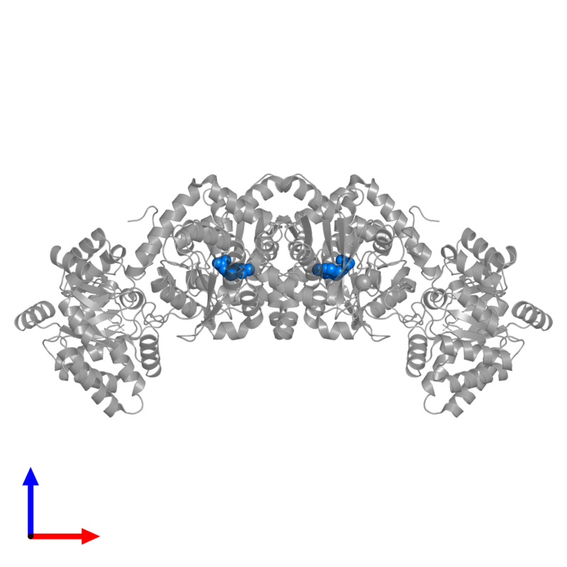 <div class='caption-body'>PDB entry 1wbj contains 2 copies of PYRIDOXAL-5'-PHOSPHATE in assembly 1. This small molecule is highlighted and viewed from the front.</div>