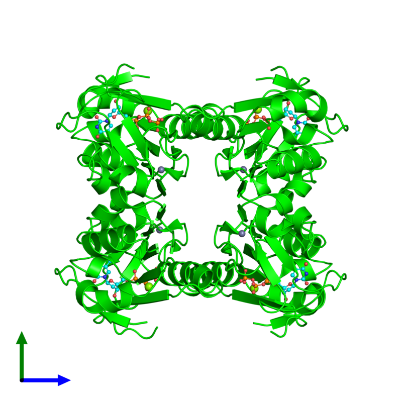 <div class='caption-body'><ul class ='image_legend_ul'> Tetrameric assembly 1 of PDB entry 1xbt coloured by chemically distinct molecules and viewed from the front. This assembly contains:<li class ='image_legend_li'>4 copies of Thymidine kinase, cytosolic</li><li class ='image_legend_li'>4 copies of ZINC ION</li><li class ='image_legend_li'>4 copies of MAGNESIUM ION</li><li class ='image_legend_li'>4 copies of THYMIDINE-5'-TRIPHOSPHATE</li></ul></div>