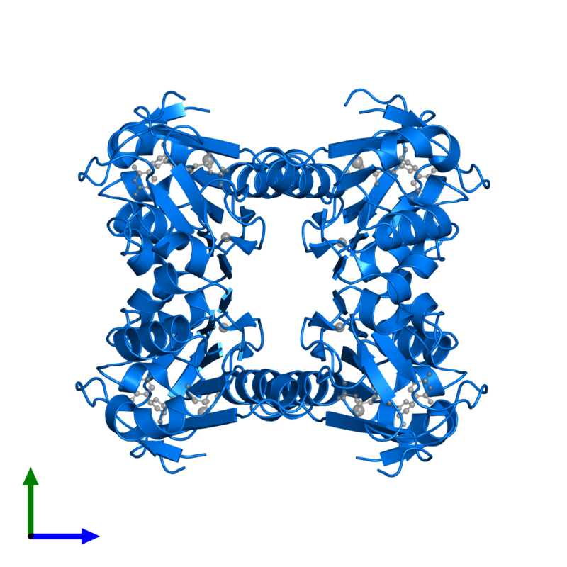 <div class='caption-body'>PDB entry 1xbt contains 4 copies of Thymidine kinase, cytosolic in assembly 1. This protein is highlighted and viewed from the front.</div>