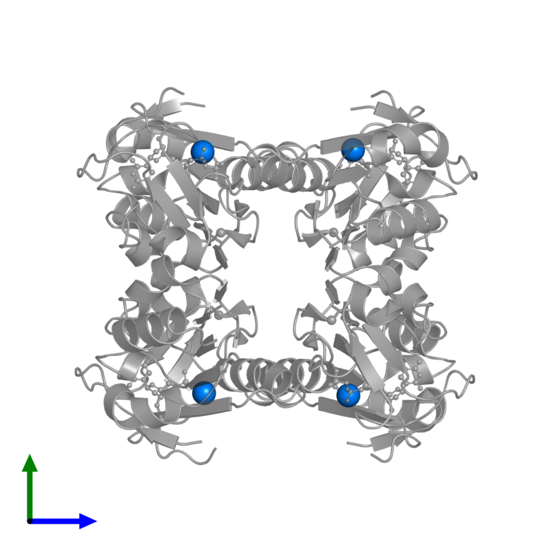 <div class='caption-body'>PDB entry 1xbt contains 4 copies of MAGNESIUM ION in assembly 1. This small molecule is highlighted and viewed from the front.</div>