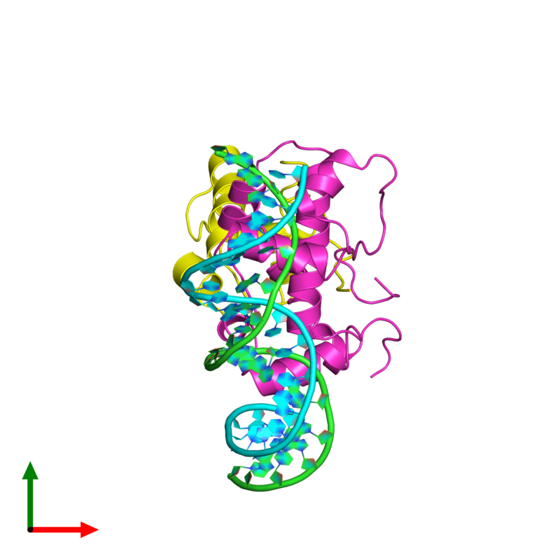 <div class='caption-body'><ul class ='image_legend_ul'>The deposited structure of PDB entry 1xs9 coloured by chain and viewed from the top. The entry contains: <li class ='image_legend_li'>1 copy of 5'-D(P*GP*AP*TP*TP*TP*AP*GP*CP*AP*AP*AP*AP*CP*GP*TP*GP*GP*CP*AP*T)-3'</li><li class ='image_legend_li'>1 copy of 5'-D(P*AP*TP*GP*CP*CP*AP*CP*GP*TP*TP*TP*TP*GP*CP*TP*AP*AP*AP*TP*C)-3'</li><li class ='image_legend_li'>1 copy of Multiple antibiotic resistance protein marA</li><li class ='image_legend_li'>1 copy of DNA-directed RNA polymerase alpha chain</li><li class ='image_legend_li'>There are no non-polymeric molecules</li></ul></li></ul></li></div>