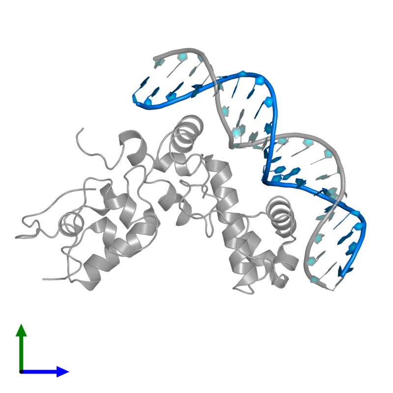 <div class='caption-body'>PDB entry 1xs9 contains 1 copy of 5'-D(P*AP*TP*GP*CP*CP*AP*CP*GP*TP*TP*TP*TP*GP*CP*TP*AP*AP*AP*TP*C)-3' in assembly 1. This DNA molecule is highlighted and viewed from the front.</div>