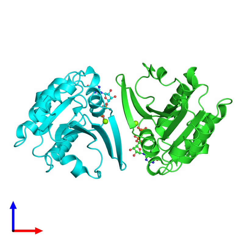 <div class='caption-body'><ul class ='image_legend_ul'>The deposited structure of PDB entry 1z6x coloured by chain and viewed from the side. The entry contains: <li class ='image_legend_li'>2 copies of ADP-ribosylation factor 4</li><li class ='image_legend_li'>2 non-polymeric entities<ul class ='image_legend_ul'><li class ='image_legend_li'>2 copies of MAGNESIUM ION</li><li class ='image_legend_li'>2 copies of GUANOSINE-5'-DIPHOSPHATE</li></ul></li></div>
