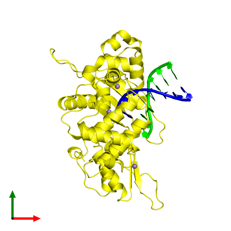 <div class='caption-body'><ul class ='image_legend_ul'>The deposited structure of PDB entry 1zqm coloured by chemically distinct molecules and viewed from the top. The entry contains: <li class ='image_legend_li'>1 copy of DNA (5'-D(*CP*AP*TP*TP*AP*GP*AP*A)-3')</li><li class ='image_legend_li'>1 copy of DNA (5'-D(*TP*CP*TP*AP*AP*TP*G)-3')</li><li class ='image_legend_li'>1 copy of DNA polymerase beta</li><li class ='image_legend_li'>There is 1 non-polymeric molecule<ul class ='image_legend_ul'><li class ='image_legend_li'>3 copies of MANGANESE (II) ION</li></ul></li></div>