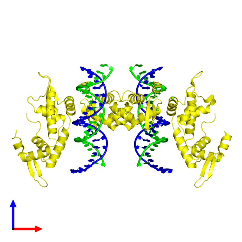 <div class='caption-body'><ul class ='image_legend_ul'>The deposited structure of PDB entry 2a07 coloured by chemically distinct molecules and viewed from the front. The entry contains: <li class ='image_legend_li'>2 copies of 5'-D(*AP*AP*CP*TP*AP*TP*GP*AP*AP*AP*CP*AP*AP*AP*TP*TP*TP*TP*CP*CP*T)-3'</li><li class ='image_legend_li'>2 copies of 5'-D(*TP*TP*AP*GP*GP*AP*AP*AP*AP*TP*TP*TP*GP*TP*TP*TP*CP*AP*TP*AP*G)-3'</li><li class ='image_legend_li'>6 copies of Forkhead box protein P2</li><li class ='image_legend_li'>There is 1 non-polymeric molecule<ul class ='image_legend_ul'><li class ='image_legend_li'>6 copies of MAGNESIUM ION</li></ul></li></div>