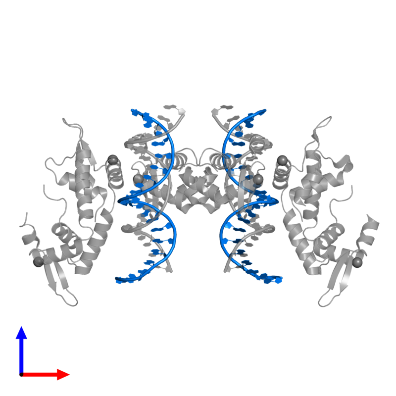 <div class='caption-body'>PDB entry 2a07 contains 2 copies of 5'-D(*TP*TP*AP*GP*GP*AP*AP*AP*AP*TP*TP*TP*GP*TP*TP*TP*CP*AP*TP*AP*G)-3' in assembly 1. This DNA molecule is highlighted and viewed from the front.</div>