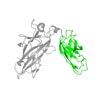 1 copy of SCOP domain 81279 (NF-kappa-B/REL/DORSAL transcription factors, C-terminal domain) in Nuclear factor of activated T-cells, cytoplasmic 2 in PDB 2as5.