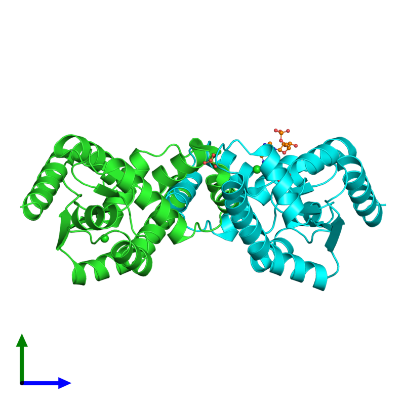 <div class='caption-body'><ul class ='image_legend_ul'> Dimeric assembly 1 of PDB entry 2bwj coloured by chain and viewed from the side. This assembly contains:<li class ='image_legend_li'>2 copies of ADENYLATE KINASE 5</li><li class ='image_legend_li'>3 copies of SULFATE ION</li><li class ='image_legend_li'>2 copies of CHLORIDE ION</li><li class ='image_legend_li'>One copy of ADENOSINE MONOPHOSPHATE</li></ul></div>