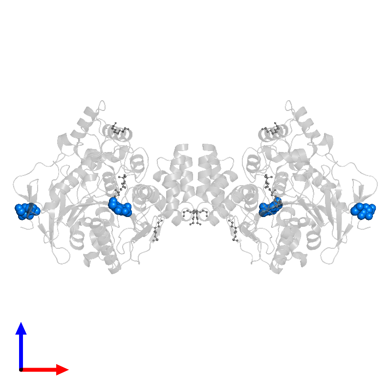 <div class='caption-body'>PDB entry 2c5f contains 4 copies of 2-acetamido-2-deoxy-beta-D-glucopyranose in assembly 1. This small molecule is highlighted and viewed from the front.</div>