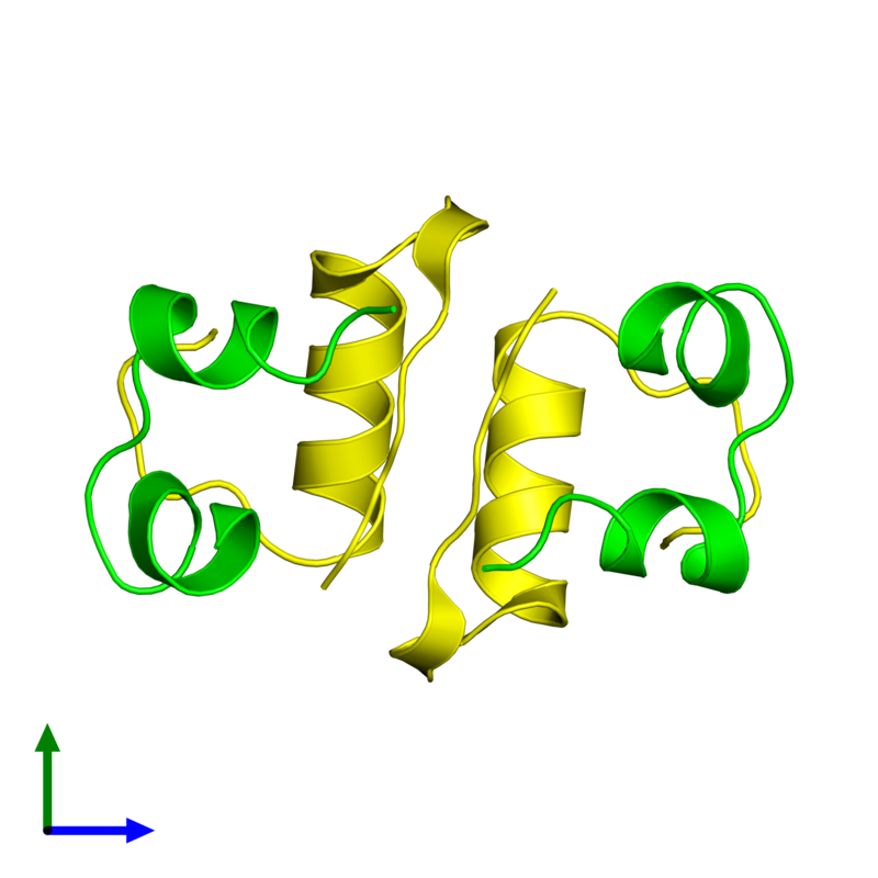 <div class='caption-body'><ul class ='image_legend_ul'> Tetrameric assembly 1 of PDB entry 2c8r coloured by chemically distinct molecules and viewed from the front. This assembly contains:<li class ='image_legend_li'>2 copies of Insulin A chain</li><li class ='image_legend_li'>2 copies of Insulin B chain</li></ul></div>