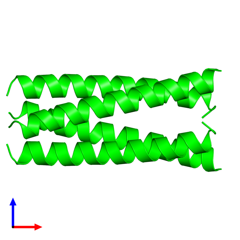 <div class='caption-body'><ul class ='image_legend_ul'> Tetrameric assembly 1 of PDB entry 2cce coloured by chemically distinct molecules and viewed from the front. This assembly contains:<li class ='image_legend_li'>4 copies of General control transcription factor GCN4</li></ul></div>