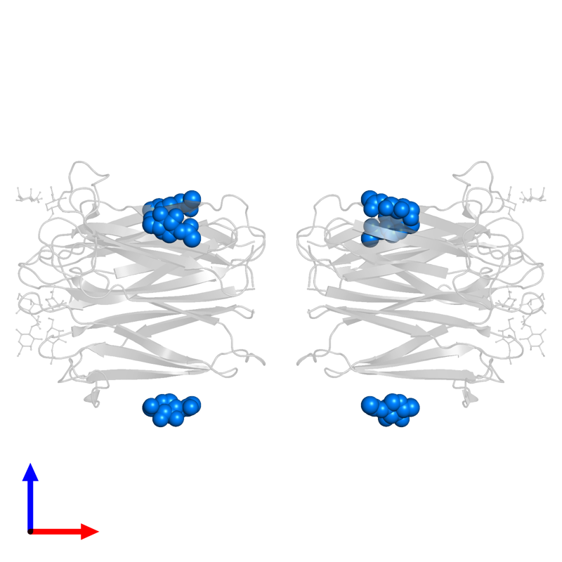 <div class='caption-body'>PDB entry 2cgy contains 6 copies of 2-acetamido-2-deoxy-beta-D-glucopyranose in assembly 1. This small molecule is highlighted and viewed from the front.</div>