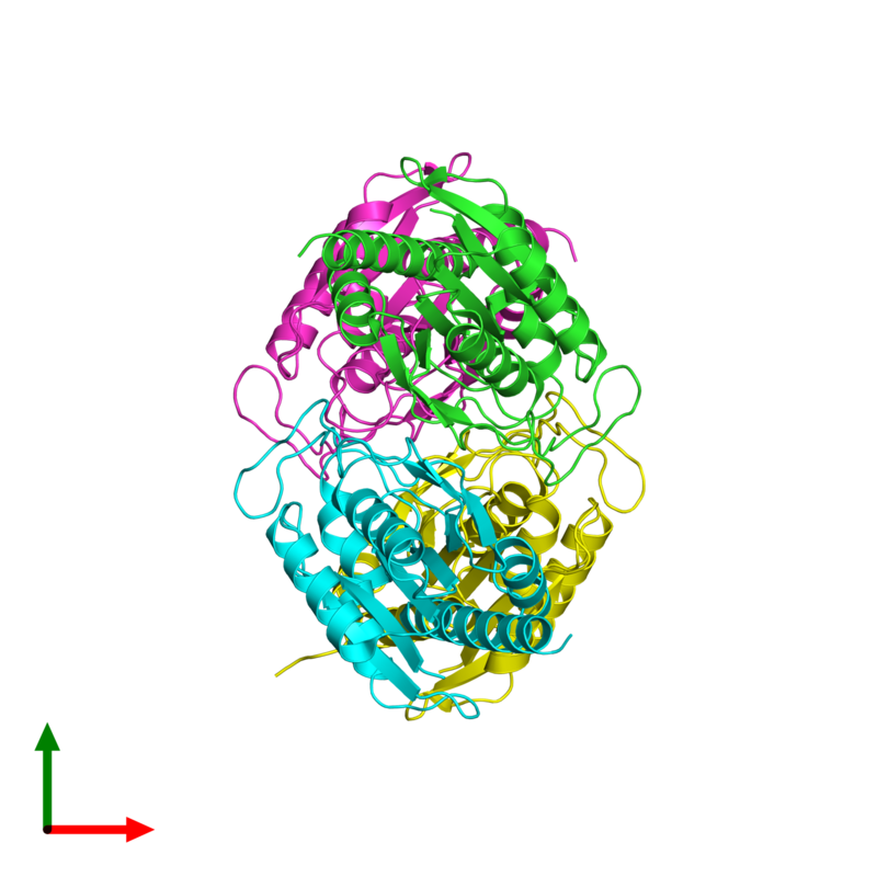 <div class='caption-body'><ul class ='image_legend_ul'>The deposited structure of PDB entry 2df5 coloured by chain and viewed from the top. The entry contains: <li class ='image_legend_li'>4 copies of Pyrrolidone-carboxylate peptidase</li><li class ='image_legend_li'>There are no non-polymeric molecules</li></ul></li></ul></li></div>