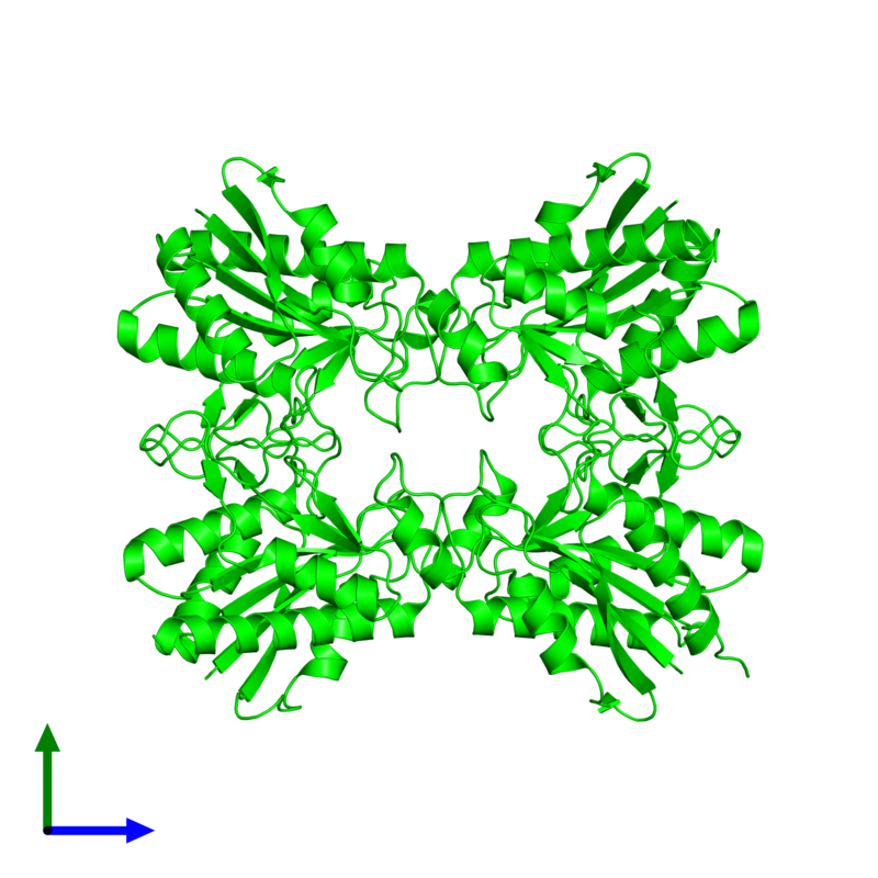 <div class='caption-body'><ul class ='image_legend_ul'>The deposited structure of PDB entry 2df5 coloured by chemically distinct molecules and viewed from the front. The entry contains: <li class ='image_legend_li'>4 copies of Pyrrolidone-carboxylate peptidase</li><li class ='image_legend_li'>There are no non-polymeric molecules</li></ul></li></ul></li></div>