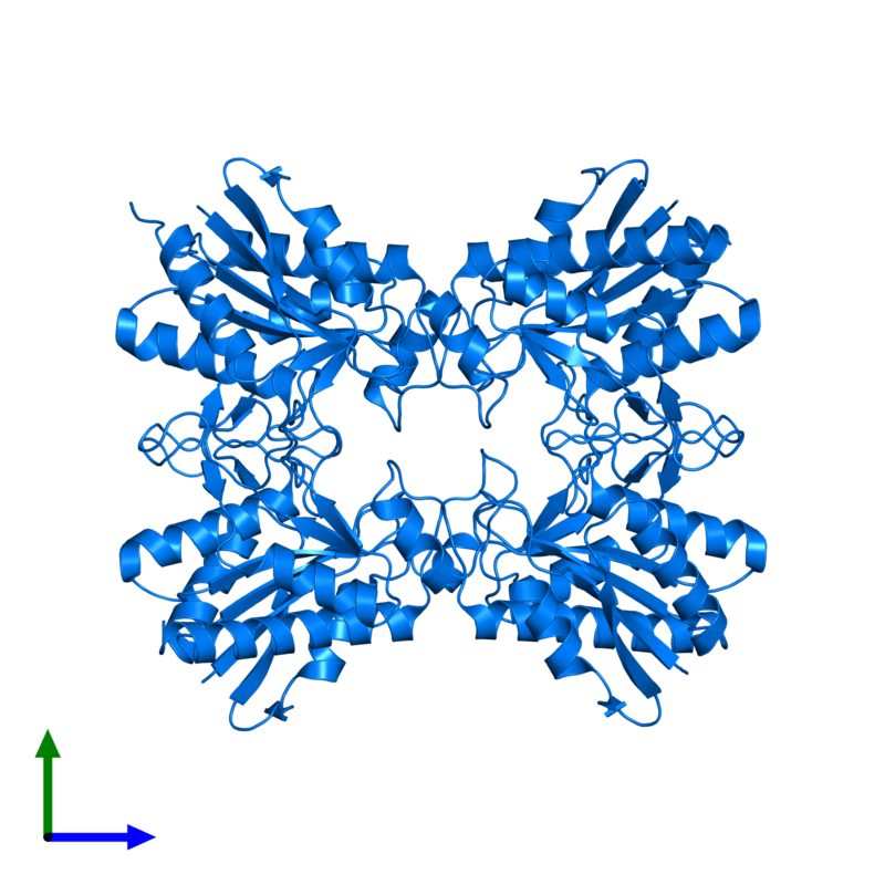 <div class='caption-body'>PDB entry 2df5 contains 4 copies of Pyrrolidone-carboxylate peptidase in assembly 1. This protein is highlighted and viewed from the front.</div>